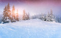 Colorful panorama of the winter sunrise in mountain forest Royalty Free Stock Photo