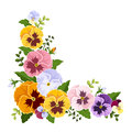 Colorful pansy flowers corner. Vector illustration. Royalty Free Stock Photo