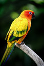 Colorful Parrot Stock Photo