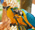 Colorful parrot bird Stock Photos