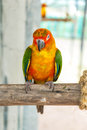 Colorful parrot bird sitting on the perch in zoo Royalty Free Stock Photography