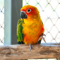 Colorful parrot bird sitting on the perch in zoo Stock Image