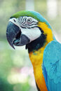 Colorful parrot birds Royalty Free Stock Photo