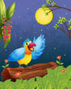 A colorful parrot in a bright evening illustration of Stock Images