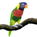 Colorful parrot isolated white background Stock Image
