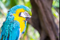 Colorful parrot macaw head close up shot Stock Photo