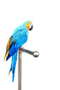 Colorful parrot macaw isolated on white background Stock Image
