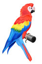 Colorful parrot macaw isolated on white background vector illustration for your bird wildlife design vivid bird sitting perch Royalty Free Stock Images