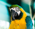 Colorful parrot parrots head closeup shot Royalty Free Stock Photos