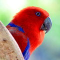 Colorful parrot portrait of Royalty Free Stock Image