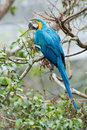 Colorful parrot on the tree branch Stock Photos