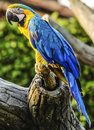 Colorful parrot vibrant on the branch Royalty Free Stock Image