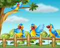 Colorful parrots at the fenced garden illustration of Stock Photography
