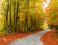 Colorful path a autumn in the forest Royalty Free Stock Photo