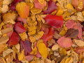 Colorful pattern of fallen autumn leaves a in red yellow and orange Stock Photography