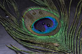 Colorful peacock feather in greco roman mythology the is identified with hera juno who created the from argus whose hundred eyes Royalty Free Stock Photos