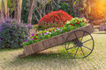 Colorful of petunia flowers on trolley wooden in garden Royalty Free Stock Photo