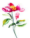 Colorful pink flower watercolor illustration Royalty Free Stock Image