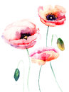 Colorful pink flower watercolor illustration Stock Image
