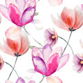 Colorful pink flowers watercolor illustration seamless pattern Royalty Free Stock Images