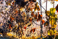 Colorful plants with leaves and blossoms in autumn Royalty Free Stock Photo