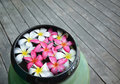 Colorful of plumeria Stock Photography