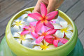 Colorful of plumeria Stock Photo