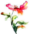 Colorful poppy flower watercolor illustration Royalty Free Stock Photo