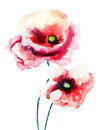 Colorful poppy flowers watercolor illustration Royalty Free Stock Photo