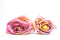 Colorful preserved twice roses isolated on white background Stock Photography