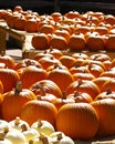 Colorful Pumpkin Harvest Stock Photography