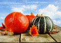 Colorful pumpkins against blue sky Royalty Free Stock Photo