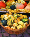 Colorful pumpkins in basket Royalty Free Stock Photo