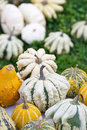 Colorful pumpkins collection Royalty Free Stock Images