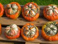 Colorful pumpkins for Halloween Scary Jack Stock Images