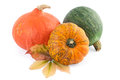 Colorful Pumpkins Squash Royalty Free Stock Photo
