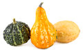 Colorful pumpkins various of gourds ornamental Royalty Free Stock Photo