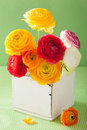 Colorful ranunculus flowers in vase over green background Royalty Free Stock Photo