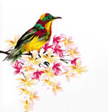 Colorful   realistic tropical bird sit a branch on white Royalty Free Stock Photos