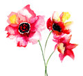Colorful red flowers watercolor illustration Royalty Free Stock Photo