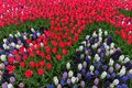 Colorful red tulips garden patchwork Royalty Free Stock Photo