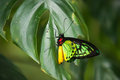 Colorful red yellow and green butterfly sitting on a green leaf. Royalty Free Stock Photo