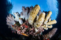 Colorful reef invertebrates in tropical pacific sponges and other grow on the edge of a raja ampat indonesia this beautiful area Stock Photos