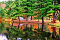 Colorful Reflection of Trees on Water Royalty Free Stock Photo