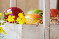 Colorful ripe red yellow apples, pears in vintage wood box, summer flower, fruits in basket, outdoors, garden Royalty Free Stock Photo