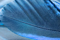 Colorful rooster feather with reflexions details and Royalty Free Stock Photos