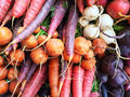 Colorful root vegetables сarrots beetroots and turnips autumn market Royalty Free Stock Images