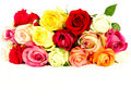 Colorful roses, beautiful flower bouquet on white Stock Image