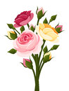 Colorful roses branch with red pink and yellow english and rose buds isolated on a white background Stock Images