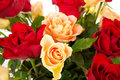 Colorful roses in closeup Royalty Free Stock Images
